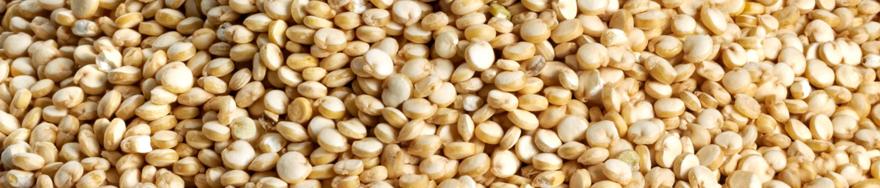 Health Benefits of Gluten Free Quinoa
